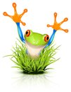Little tree frog on grass Royalty Free Stock Images