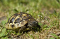 Little turtle Stock Photo
