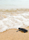 Little turtle go on oceans Stock Images