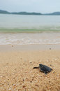 Little turtle go oceans on beach Stock Photos