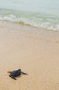 Little turtle go oceans on beach Stock Image