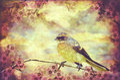 Little Vintage Songbird