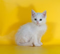 Little white fluffy kitten sits on yellow background Royalty Free Stock Photography