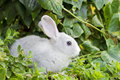 Little white rabbit in green grass Stock Images