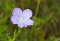Little wild bell-flower Stock Photos