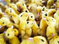 Little yellow beautiful fluffy cute ducklings surrounded by other ducklings. Poultry concept