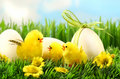 Little yellow easter chicks in the tall grass Stock Photos