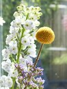 Little yellow flower in front of a window with reflections, various other flowers in the background, Focus on yellow flowe Royalty Free Stock Photo