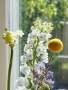 Little yellow flower in front of a window with refelctions, various other flowers in the background, Focus on yellow flowe Royalty Free Stock Photo