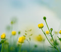 Little yellow meadow flowers and sky in early spring closeup Stock Image