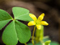 Little Yellow Unwanted Flower