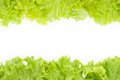 Littuce on white background frame of fresh lettuce border with vegetables Royalty Free Stock Photos
