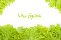Littuce on white background frame of fresh lettuce border with vegetables Stock Image