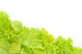 Littuce on white background frame of fresh lettuce border with vegetables Stock Photo