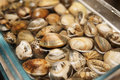 Live clams in water close up glass jar with Royalty Free Stock Photos