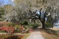 Charleston SC Live Oak Tree Hanging Moss Royalty Free Stock Photo