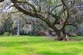 Live Oak Tree Hanging Moss Charleston South Carolina Royalty Free Stock Photo