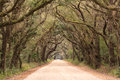 Live oak tunnel arches over dirt road entrance to botany bay plantation wildlife management area charleston edisto south carolina Royalty Free Stock Image