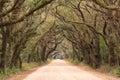 Charleston SC Botany Bay Dirt Road Spooky Tunnel Royalty Free Stock Photo