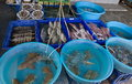 Live seafood beach market Stock Photo