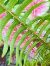 Lively Fern in dashing green Royalty Free Stock Photo