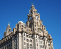 Liver Building Royalty Free Stock Photo