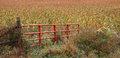 Livestock gate red open to corn field Royalty Free Stock Images