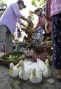 Livestock market hoi vietnam Royalty Free Stock Image