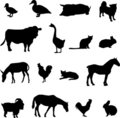Livestock and poultry Royalty Free Stock Photos