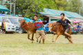 Livestock show prachuapkhirikhan thailand december tradition cow racing on fair of competition the animals on december in pranburi Stock Photography
