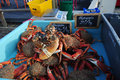 Living crustaceans for sale in the market Royalty Free Stock Image