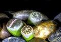 Living Stones Macro