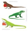 Lizard Anole Set Cartoon Vector Illustration