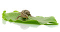 Lizard on a green leaf Royalty Free Stock Photo