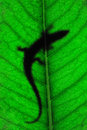 Lizard on leaf Stock Photos