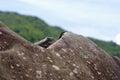 Lizard on a rock shot Stock Photo