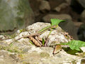 Lizard on the rocks basking in the sun Royalty Free Stock Photo