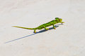 Lizard slowly creeping up beautiful colorful fun Royalty Free Stock Photography