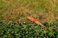 Lizard is standing on the bush Royalty Free Stock Image