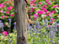 Lizard On Tree Trunk With Colorful Flowers Garden Background Royalty Free Stock Photo