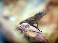 Lizard on tree trunk looking away a Stock Photos