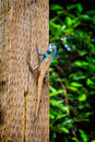 Lizard on wood pillar Royalty Free Stock Photo