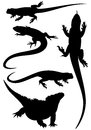Lizards fine silhouettes detailed black outlines over white Royalty Free Stock Image