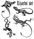 Lizards set Stock Photos