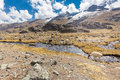 Llamas alpacas herd pasture riverbed river stream mountains, Bolivia. Royalty Free Stock Photo
