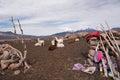 Llamas farm cute of altiplano bolivia south america Stock Photos