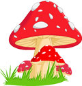 Llustration of red mushroom with grass Royalty Free Stock Photo