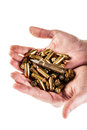 Load of bullets a heap mm pistol holded by human hands isolated over a white backgrounds Stock Photo