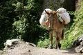 Pack Donkey Nepal