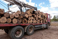 Loading of felled timber in a truck with crane Royalty Free Stock Photo